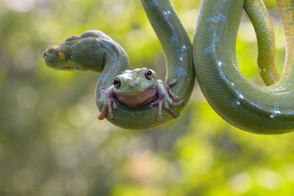 FrogNSnake
